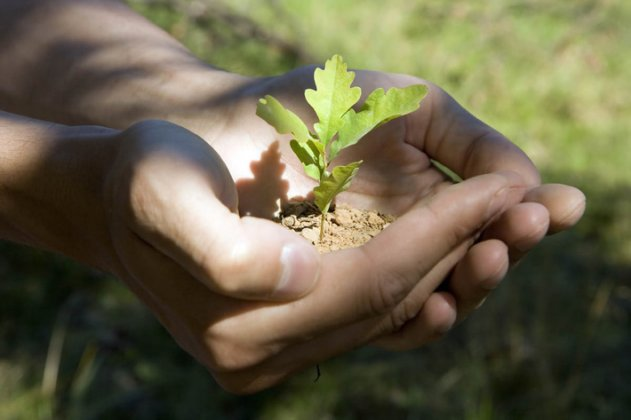 Восстановление лесов Родины - важная задача сохранения природы